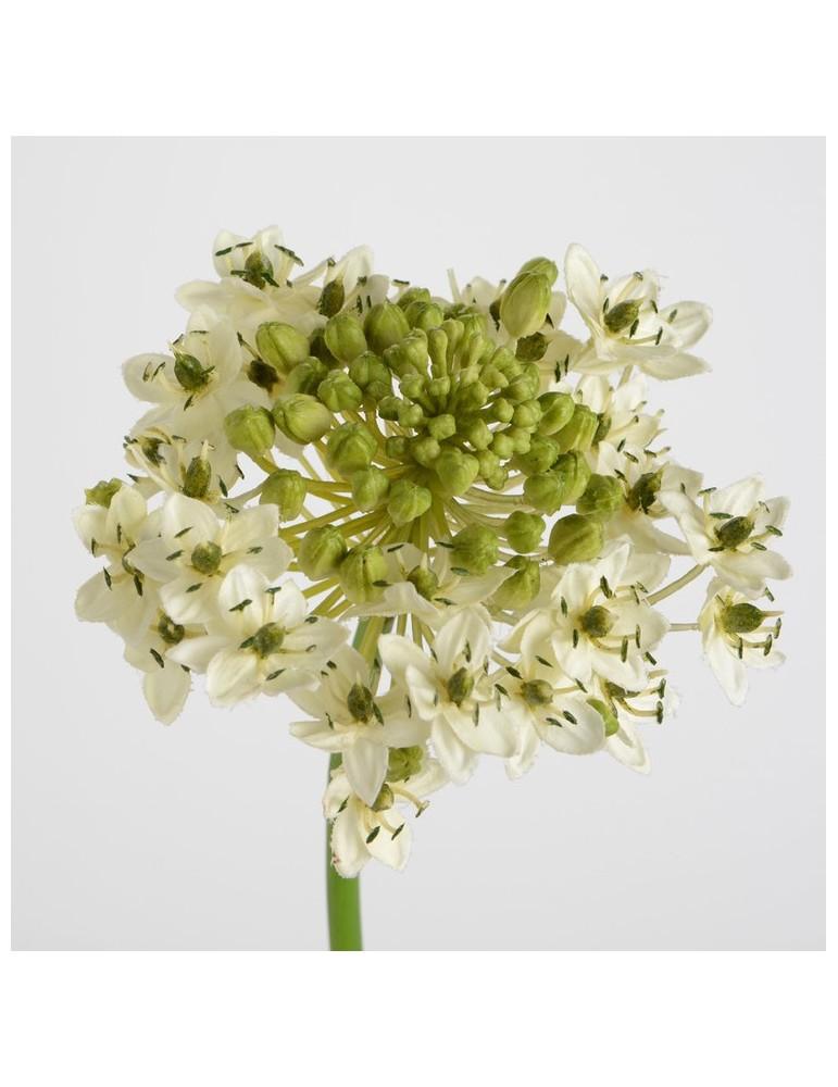 Fleur artificielle d'ornithogalum blanc/vert H.76cm NATURE DFL3208353Amadeus