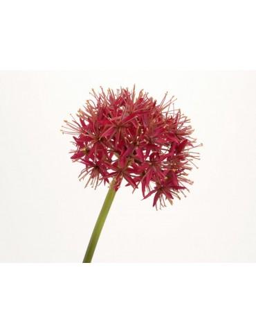 Fleur artificielle allium rose H.76cm NATURE DAA3520013