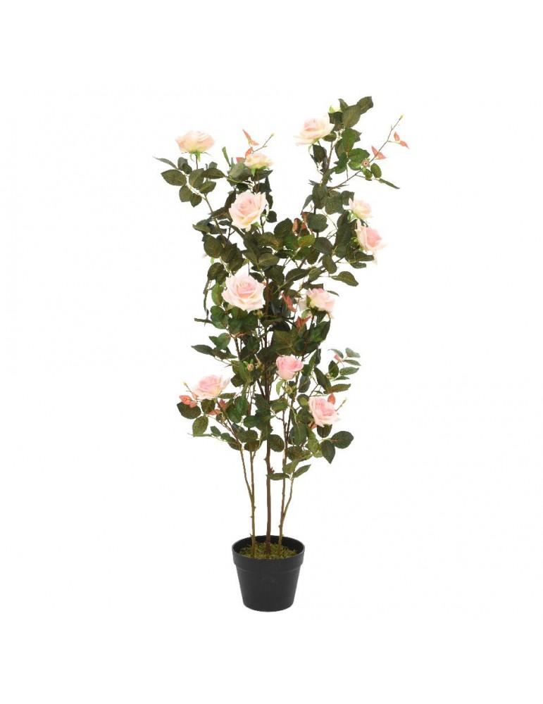Rosier en pot 16 fleurs DAA4248003Decoris