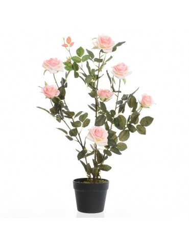 Rosier en pot 7 fleurs DAA4248004Decoris