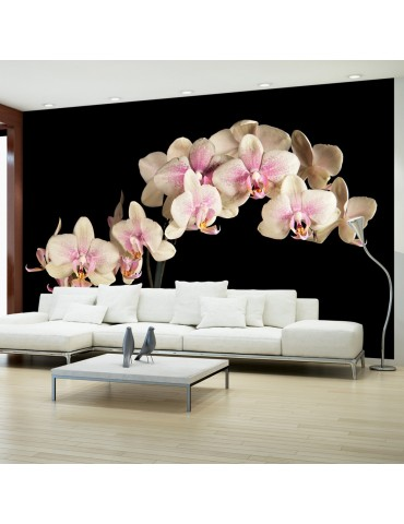 Papier peint - Orchidée en fleurs A1-F4TNT0459-P