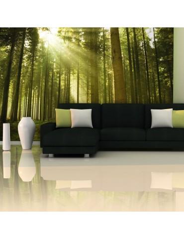 Papier peint - Forêt de pins A1-F4TNT0455-P