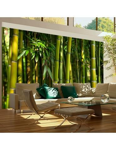 Papier peint - Forêt de bambous asiatique A1-F4TNT0454-P