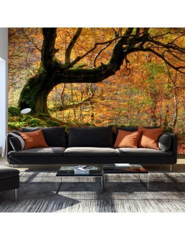 Papier peint - Automne, forêt et feuilles A1-F4TNT0498-P