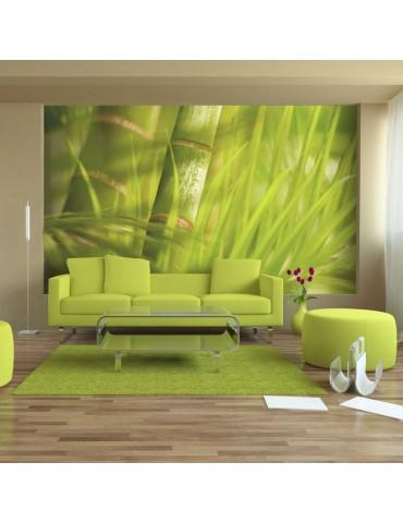 Papier peint - bambou - nature zen A1-F4TNT0495-P