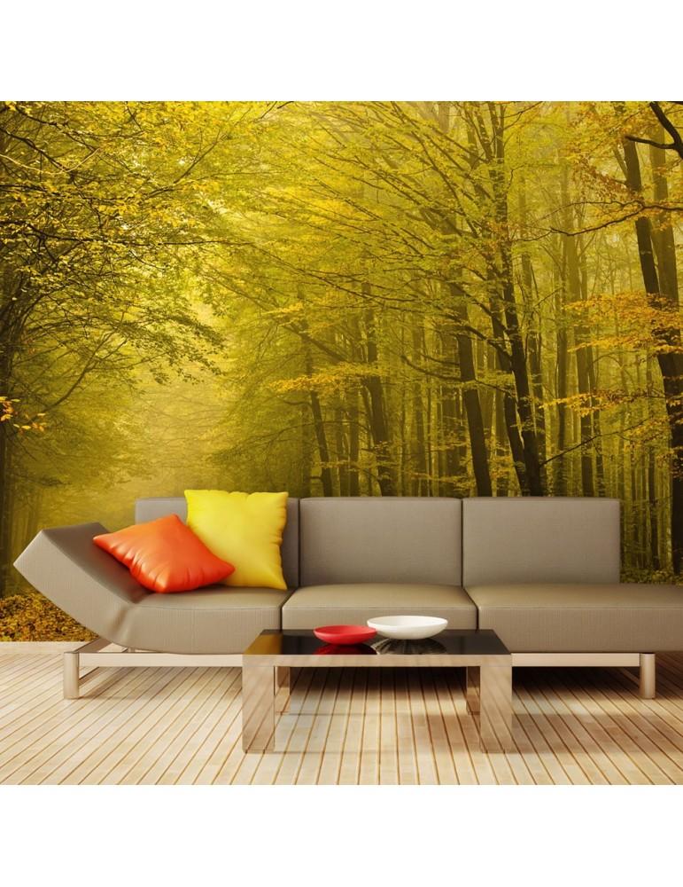 Papier peint - Route dans la forêt d'automne A1-F4TNT0494-P