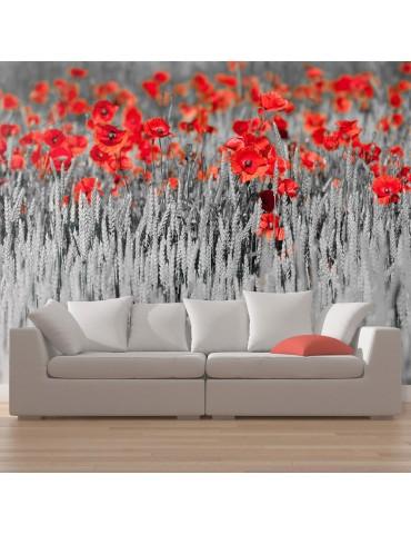 Papier peint - Coquelicots rouge sur champ noir et blanc A1-F4TNT0480-P