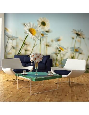 Papier peint - Marguerites - prairie de printemps A1-F4TNT0479-P