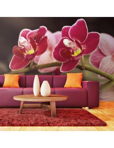 Papier peint - Branche d'orchidée se reflétant dans l'eau A1-F4TNT0464-P