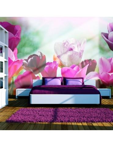 Papier peint - Jardin fleuri au printemps, tulipes A1-F4TNT0463-P