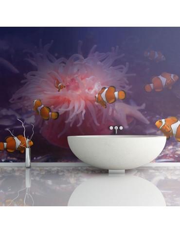Papier peint - Tropical fishes A1-LFTNT0186