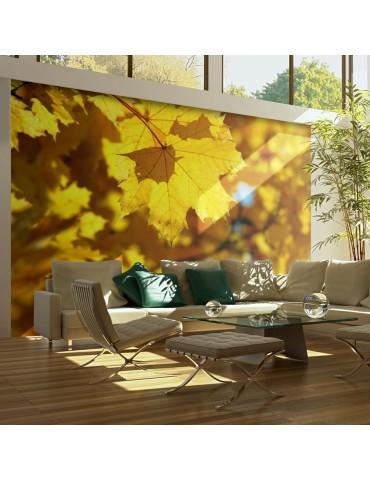 Papier peint - Sunlight on leaves of the maple A1-LFTNT0936