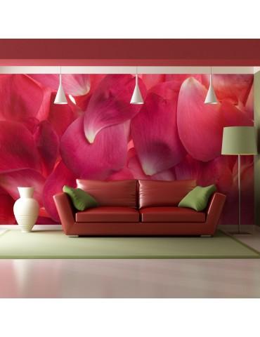 Papier peint - Pétales de roses A1-LFTNT1351