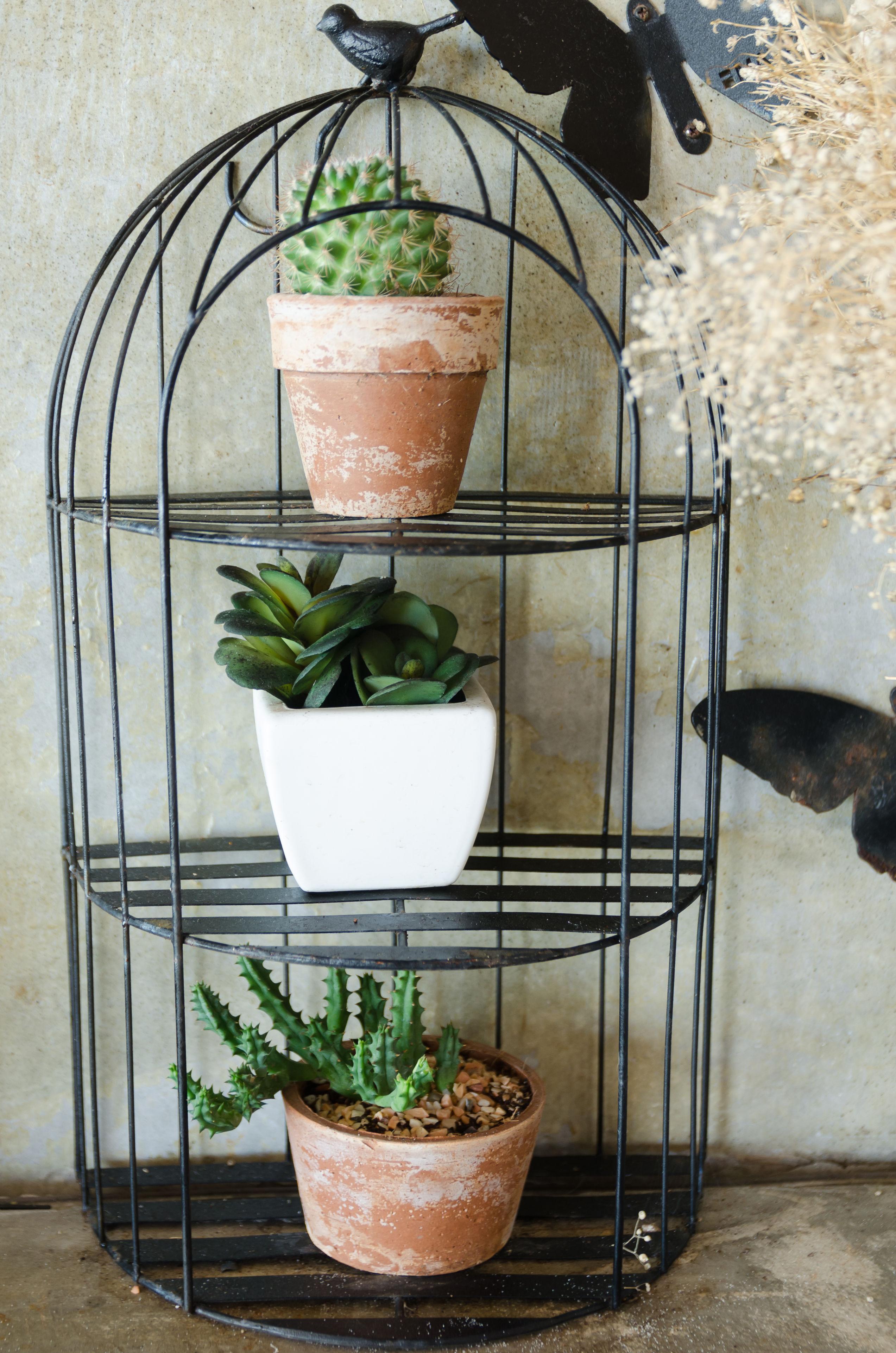 etagere de cactus