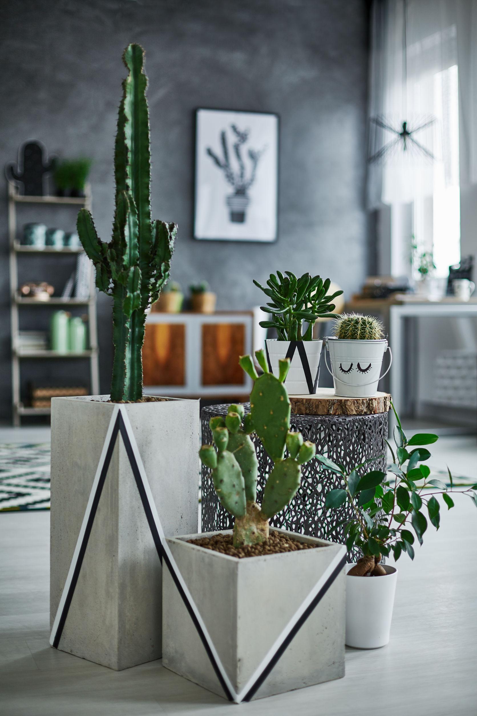 regroupement de cactus