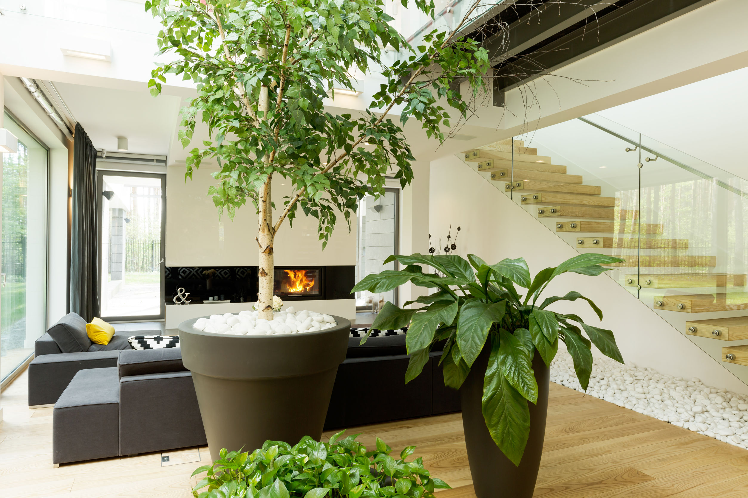 Comment d corer votre int rieur avec des plantes vertes - Plante verte salle de bain ...
