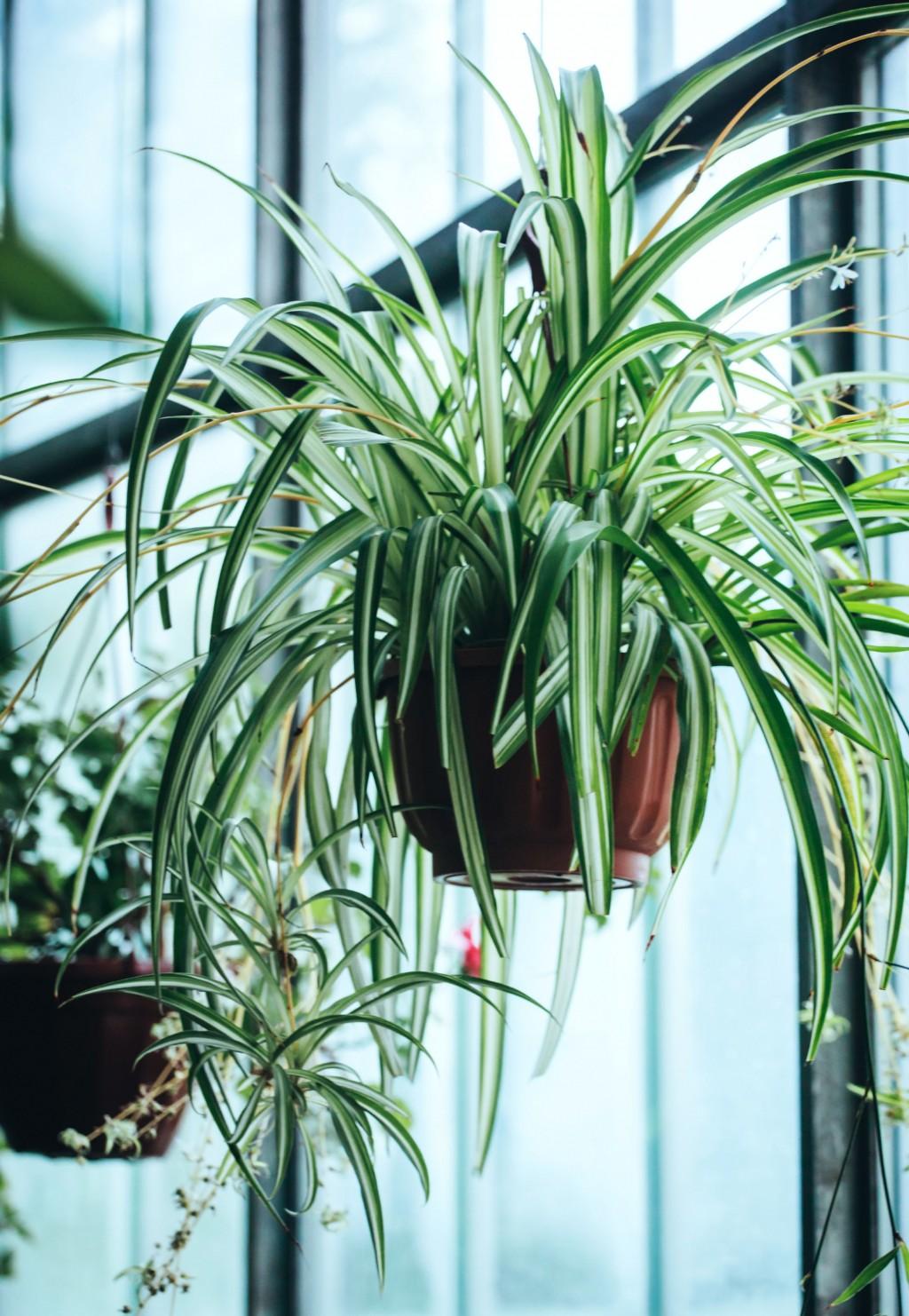 Comment Suspendre Un Plateau Au Plafond plantes suspendues pour une décoration tendance.le mag
